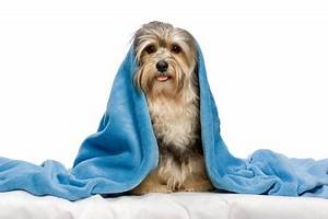 can i stop my dog from chewing up his dog bed pet guide With how to stop a dog from chewing his bed