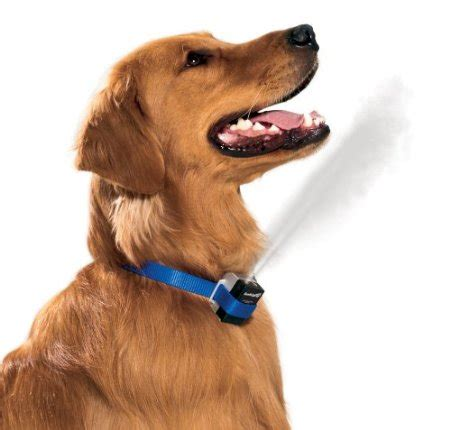 labrador barking   stop problem dog bark behavior