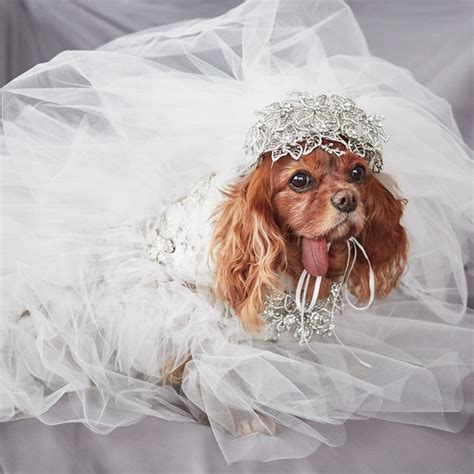 Marchesa Dress exclusive      toast  dogs marchesa 570 x 570 · jpeg