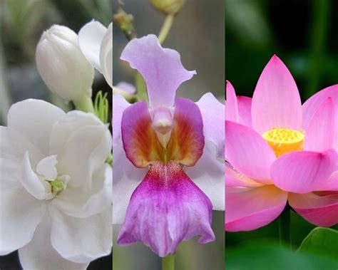 lebih cantik kembang desa bunga nasional