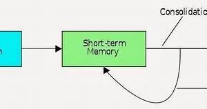 記憶鞏固(Memory Consolidation) - 小小整理網站 Smallcollation