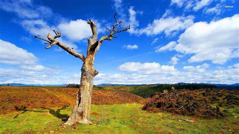 photo dry  tree cracks dry