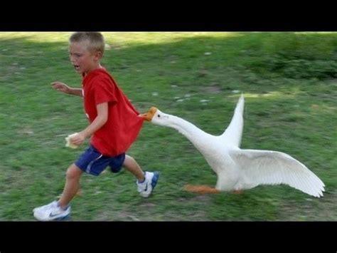 dyr aldrig undlader  gore os til  grine super sjovt