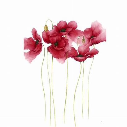 Watercolor Flower Flowers Painting Pink Background Drawing