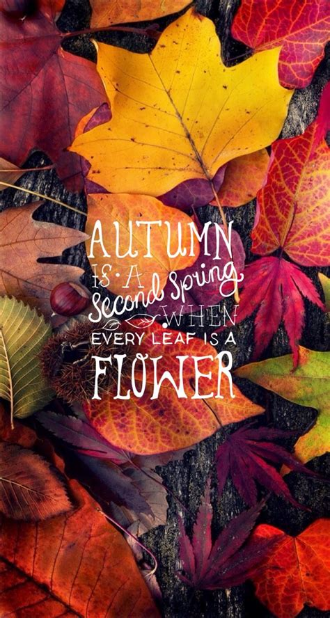 Aesthetic Fall Themed Desktop Backgrounds by Autumn Quote Iphone Mobile Wallpaper Wonderstruck