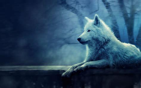 wolf screensavers  wallpaper  wallpapersafari
