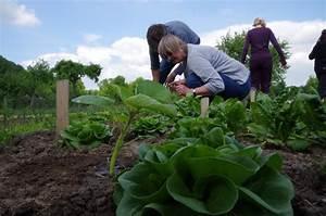 Wann Süßkartoffeln Ernten : wann salat ernten bauerngarten ~ Buech-reservation.com Haus und Dekorationen