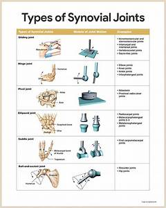 The 25  Best Synovial Joint Ideas On Pinterest