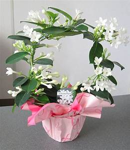 Pflegeleichte Zimmerpflanzen Mit Blüten : pflegeleichte zimmerpflanzen 18 vorschl ge ~ Eleganceandgraceweddings.com Haus und Dekorationen