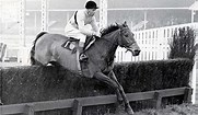 Image result for ARKLE RACEHORSE