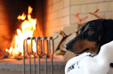 dogs for fireplaces europe trip part 4 crusoe dachshund goes to switzerland