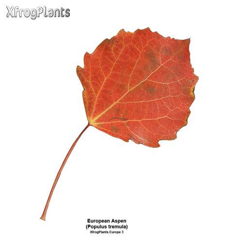 xfrogplants  trees   plants xfrogcom