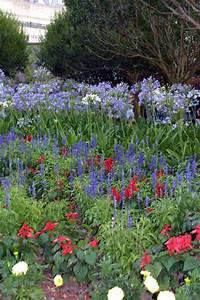 Flower & Garden 4