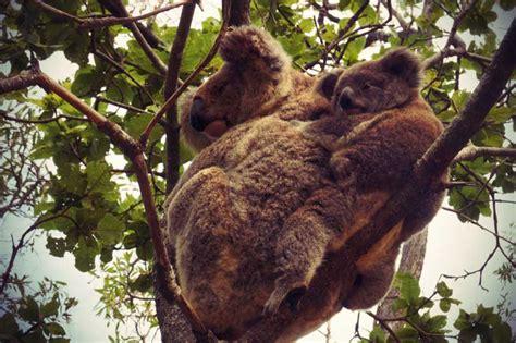 Typische Dinge Für by Typisch Australien 35 Dinge Die Du An Lieben Wirst