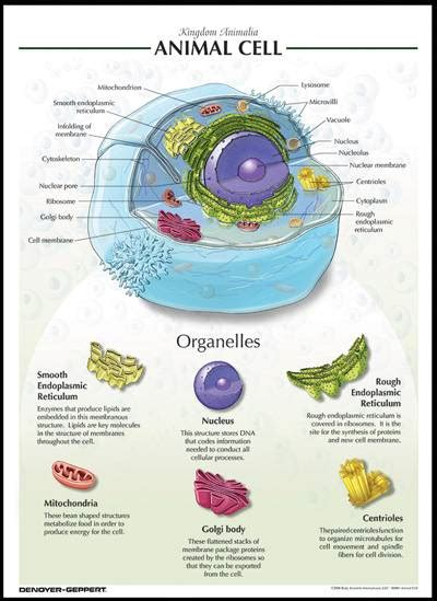 Identify The General Structures Of Animal Cells And Plant Cells  Science Form 1
