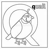 Quail Coloring Letter Template Craft Alphabet Animals Zoo Vector sketch template