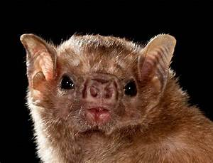 71 best images about Bats by Merlin on Pinterest ...