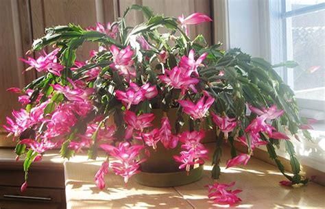 cat safe plants   home home  gardening ideas