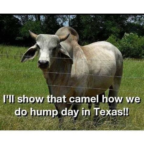 Funny Hump Day Memes - hump day in texas funny meme picture