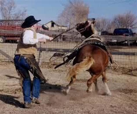 horse breaking break tennessee walking young riding bad saddle cowboy trainer own did being started why natural mare however steps