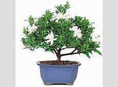 Gardenia Care
