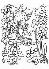 Flowers Coloring Pages Blooming Printable sketch template