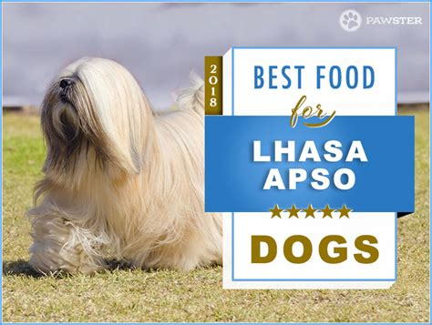 foods  feed  adult  puppy lhasa apso