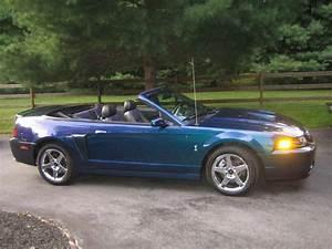 Mystic Cobra :: 2004 Ford Mustang Cobra Vert