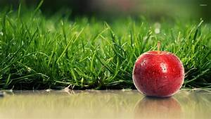 Red apple with water drops by the green grass wallpaper ...
