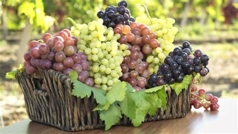 The Different Types Of Grapes For Eating And Making Wine