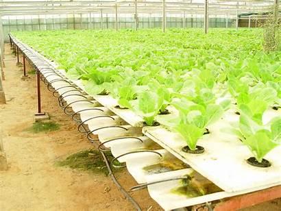Hydroponic Simple Farming Vegetable Technique Vegetables Farm