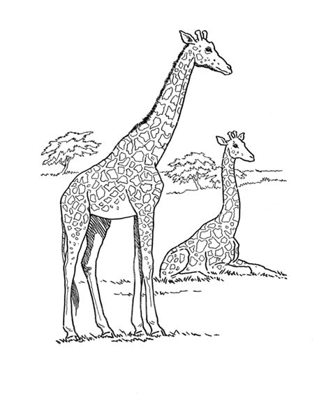 Coloring Animal Pictures by Giraffe Coloring Pages Animal Pictures