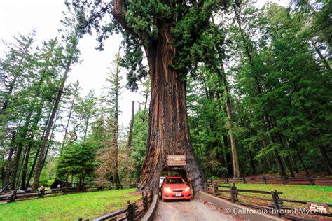 chandelier drive thru tree in leggett california through