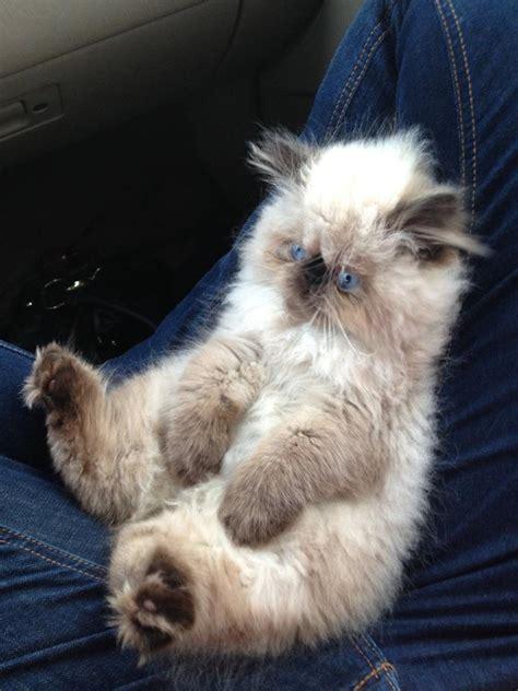 Funny cats - part 25 (29 pics) | Amazing Creatures
