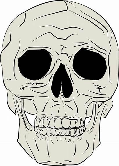 Skull Clipart Human Jp Mean Drawings Retro