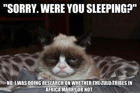 Grumpy Cat Sleep Meme - how to not stress during exam time student sharehouse