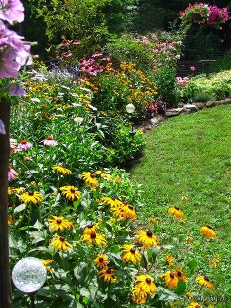 border plants for sun full sun perennial border coneflower shasta daisy rudebeckia garden pinterest
