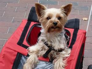 Hunde Fahrradanhänger Gefedert : unser hund im fahrradanh nger foto bild tiere ~ Jslefanu.com Haus und Dekorationen
