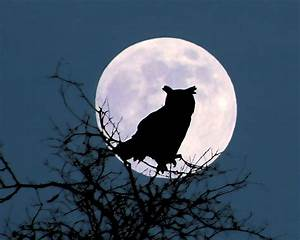 Owl And Blue Moon Photograph by Peg Urban