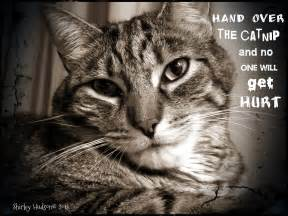 Cute Cats with Quotes