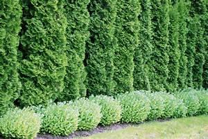 Lebensbaum Wird Braun : mit diesen tipps wird der garten zur wohlf hloase ~ Lizthompson.info Haus und Dekorationen