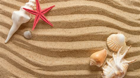seashells wallpaper collection  beautiful places