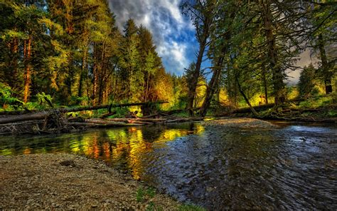 Forest River Wallpapers And Images Wallpapers Pictures