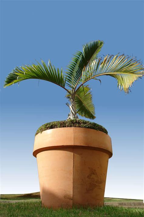 bureau de poste st colomban palmier en pot pour balcon 28 images cultiver un