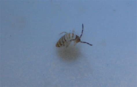 bugs in kitchen sink small orange flies in kitchen quicua com