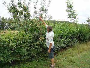 Quel Arbre Planter Près D Une Maison : planter une haie de fruits choix des arbres et arbustes ~ Dode.kayakingforconservation.com Idées de Décoration