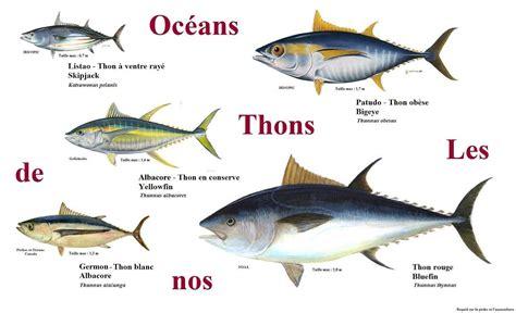 comment cuisiner du thon frais cuisine en folie tartare de thon albacore mangue et
