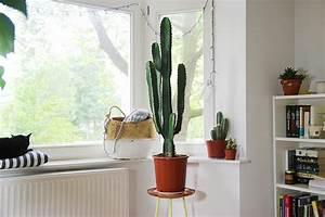 Comment Entretenir Un Cactus : mes plantes cactus mango and salt ~ Nature-et-papiers.com Idées de Décoration