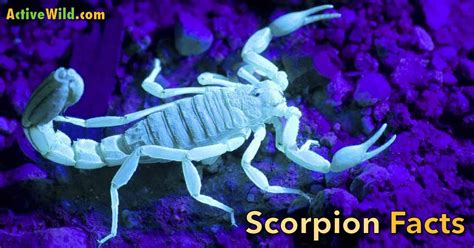 learn  scorpions scorpion facts  kids students