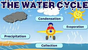 The Water Cycle  Collection  Condensation  Precipitation  Evaporation  Learning Videos For